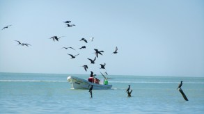 haha, wherever this boat was on the sea there was a lot of birds around it
