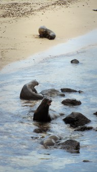 More sea lions.. they make such a funny sound