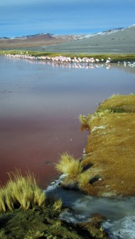Laguna colorada.. the red thing here makes the flamingos red