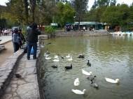 Some ducks at Parque San Martin