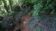 Trail in Ilha Grande