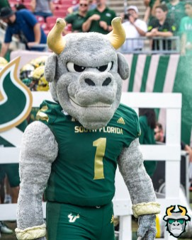 47 - SMU vs USF 2019 - USF Mascot Rocky D. Bull by David Gold - DRG00390