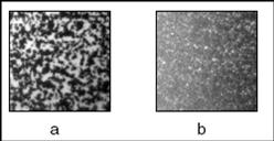 Shear Thickening and Scaling of the Elastic Modulus in a Fractal Colloidal System with