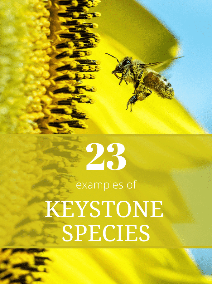 Keystone Species - Softback Travel