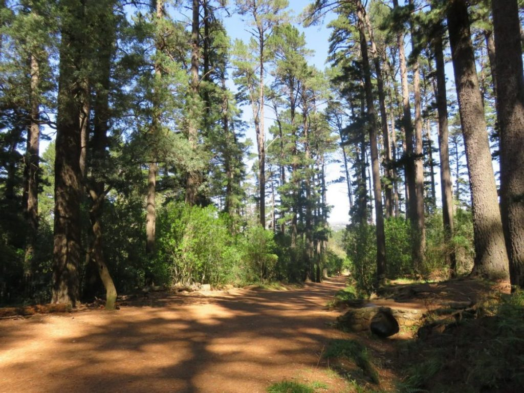 newlands forest - things to do in cape town