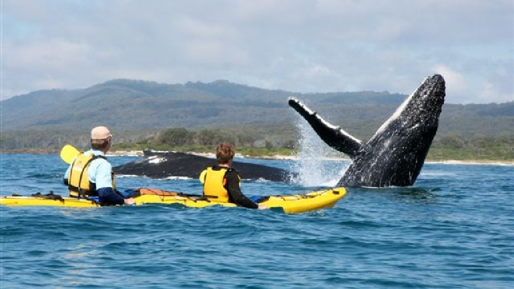 kayaking with whales in cape town