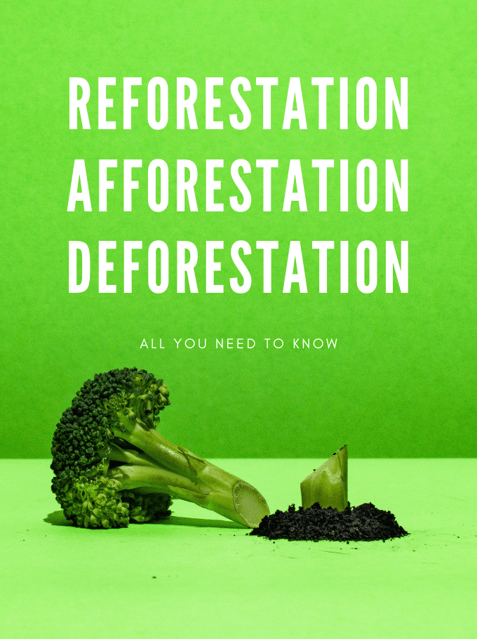 Reforestation, Afforestation and Deforestation - Softback Travel