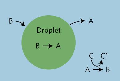 modelSchematic_fig1b