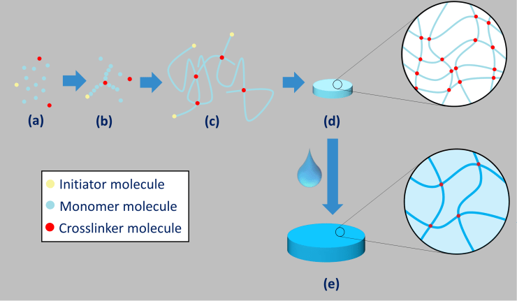Colorful cartoon schematic showing the stepwise process of polymerization from iniator, monomer, and crosslinker small molecule to crosslinked polymer chains to hydrogel materials.