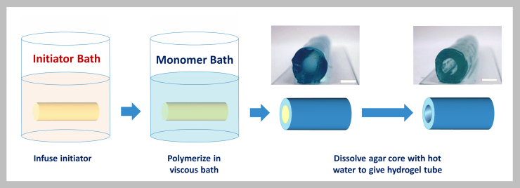 Colorful cartoon schematic showing the stepwise process to make polymer hydrogel tubes with two photographs showing the finished tubes.