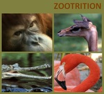 Zootrition