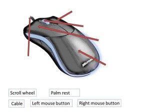 The Mouse and Touchpad