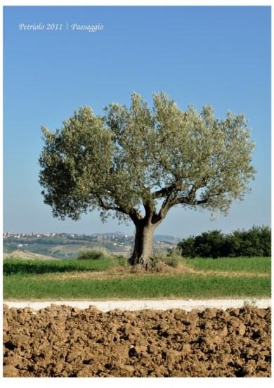 Paesaggio Marche | Petriolo 2012
