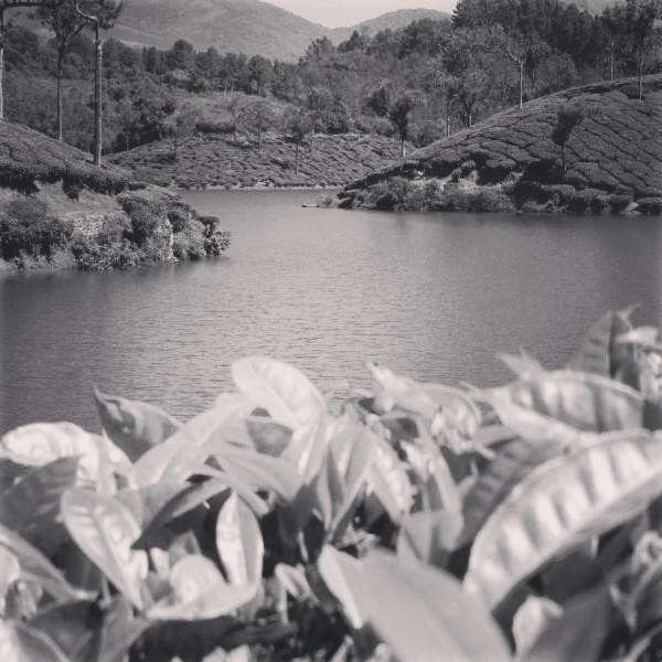 Enchanting Kerala - A Picturesque Journey (4/6)