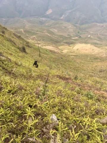 Một nam phượt thủ rơi xuống vực từ sống lưng khủng long ở núi Tà Xùa ngày mùng 4 Tết - Ảnh 3.