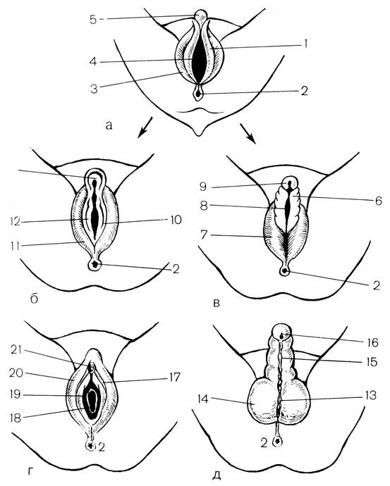 11 žingsnių sveikos erekcijos link: įtakos turi net žiovulys ir tam tikras gyvenimo būdas