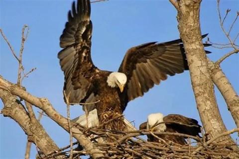 gambar burung bagi makan