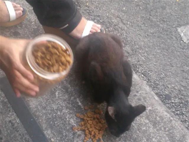 gambar makanan kucing