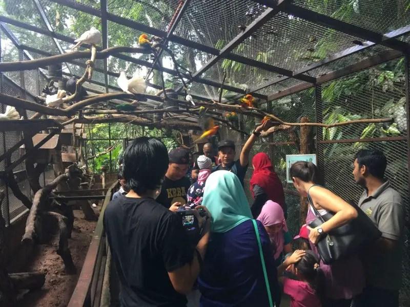 kl-tower-mini-zoo-taman-burung