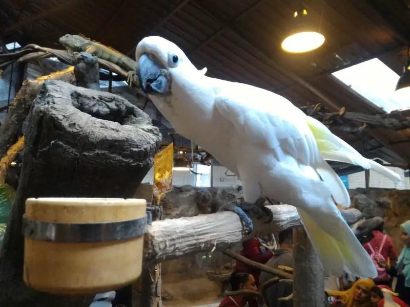 kl-tower-mini-zoo-white-parrot