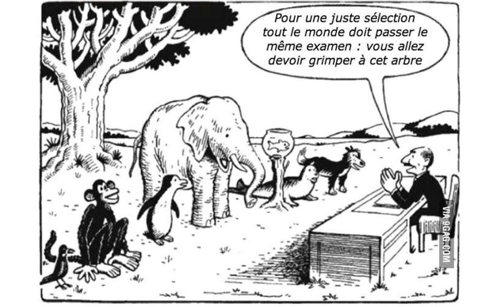 animaux qui passent un examen