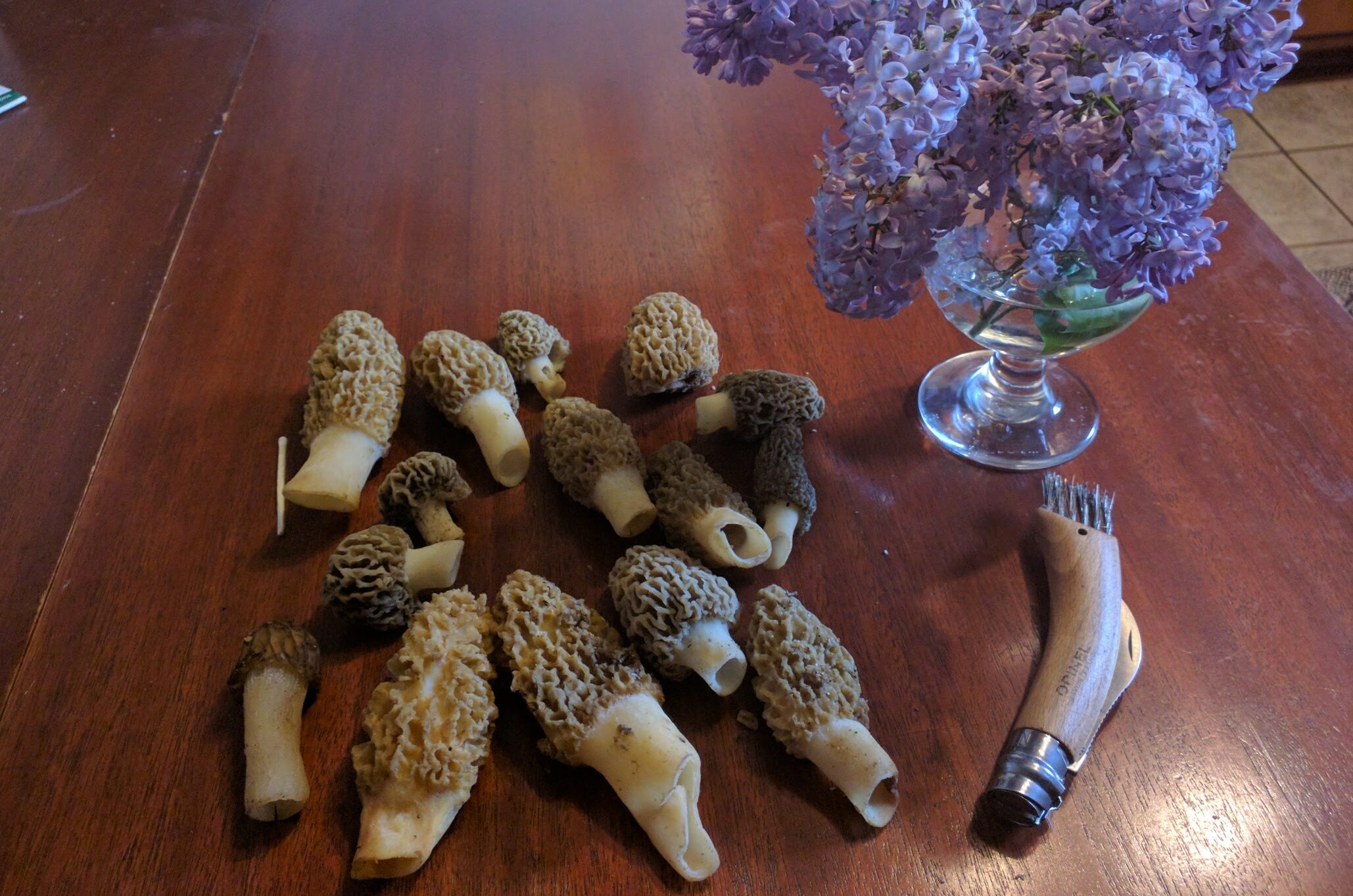 New Jersey Morels: Take Two