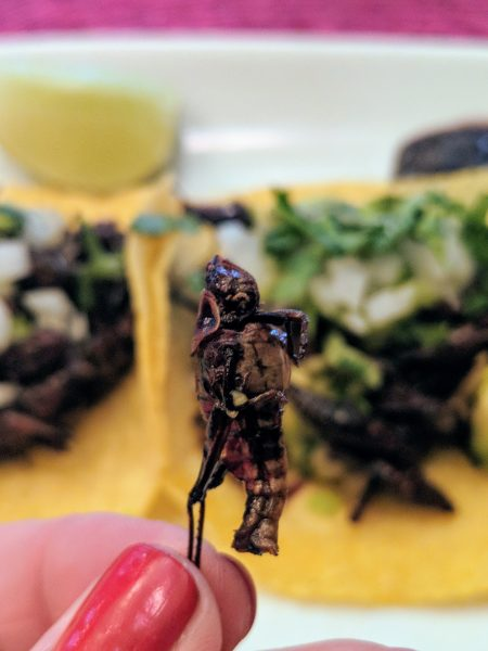 Reflections on Eating Bugs (and Drinking Them, Too)