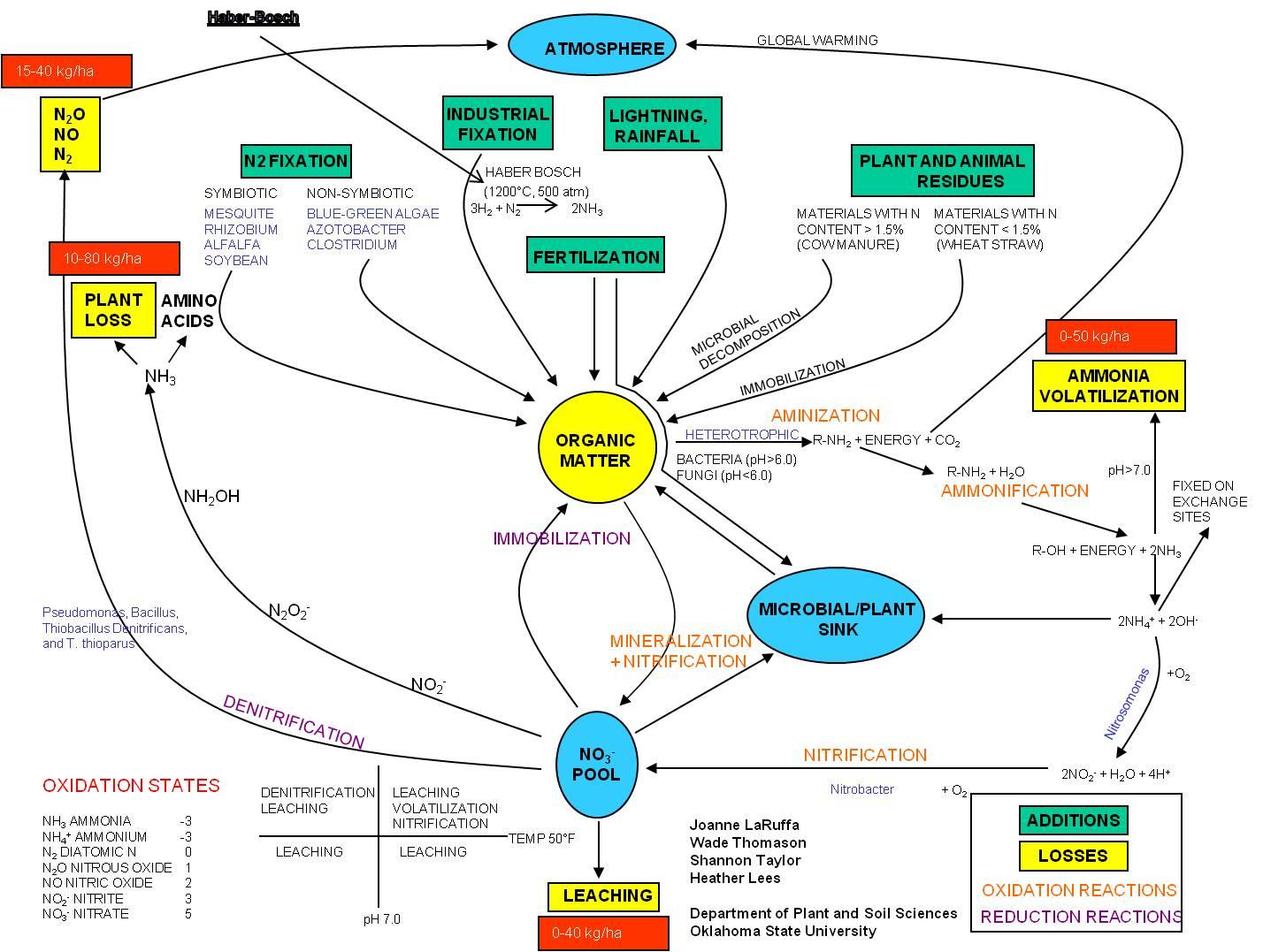 Nitrogen Cycle Powerpoint Gallery