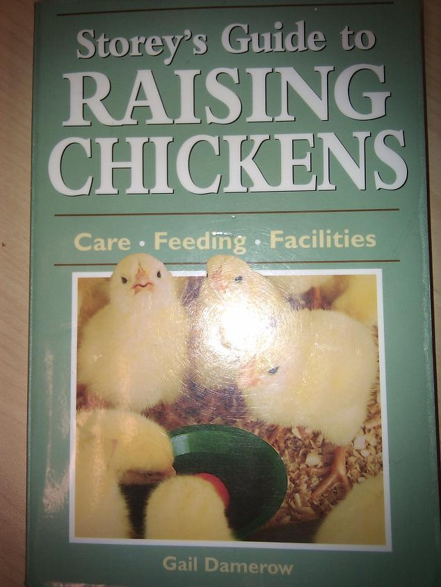 Guide To Raising Backyard Chickens 28 Images Raising