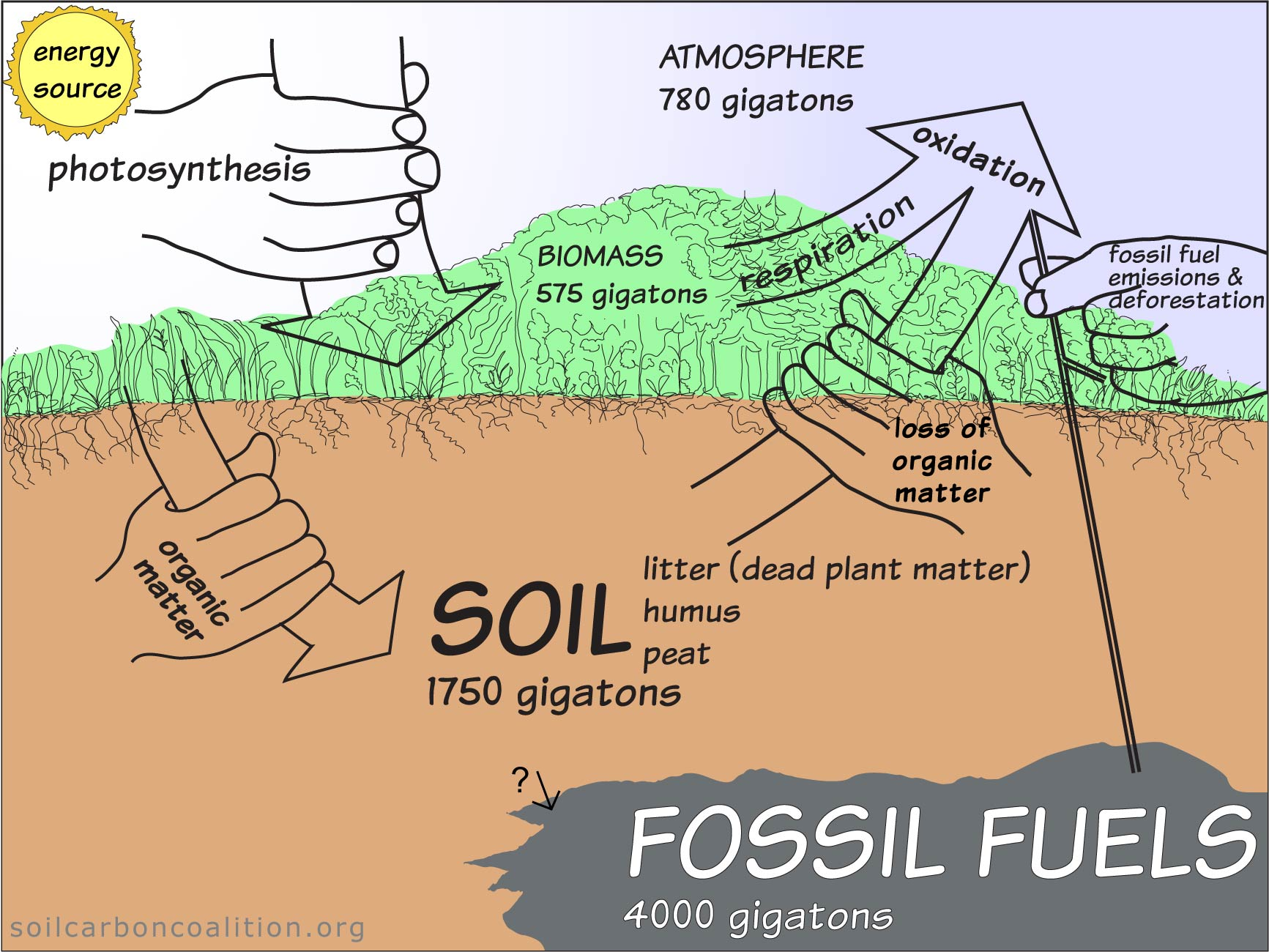 the carbon cycle diagram gcse rainforest layers simple combustion without wiring