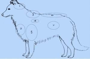 Points de tension du chien-Hourdebaight