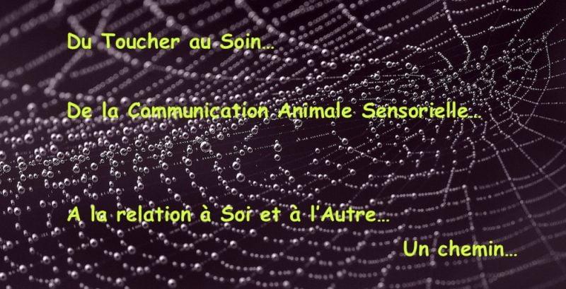 La communication animale sensorielle non verbale et le toucher
