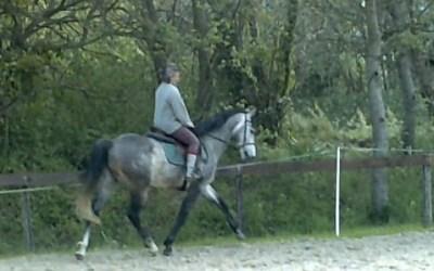 Un cheval souple ? Les exercices pour le vérifier…