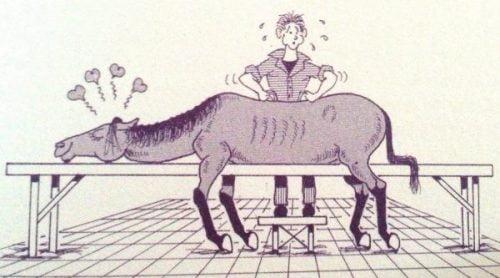 Soigner l'animal par l'ostéopathie et l'énergétique