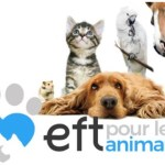 EFT pour animaux: libérer les émotions