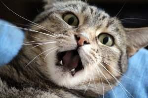 stress et tension du chat
