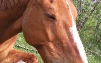 Toucher fluidique pour les animaux