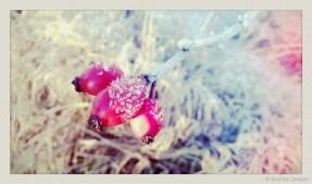soja phonephotos-13082