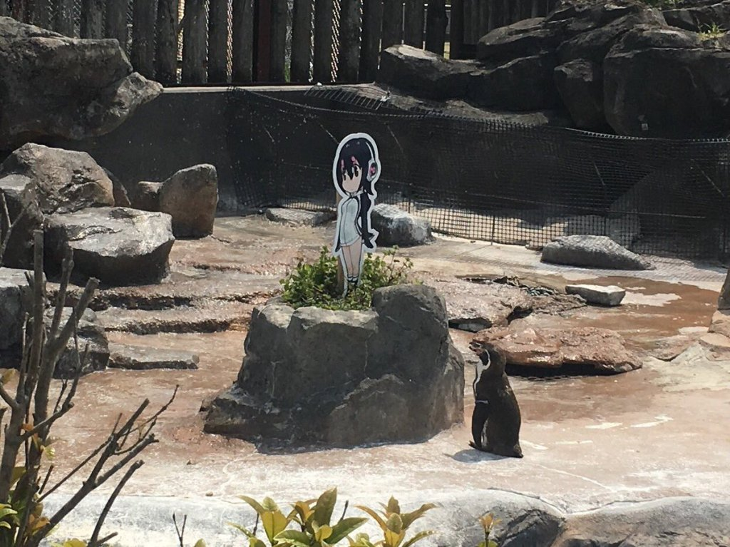 Tobu Zoo's real-life Humboldt Penguin falls in love with his Kemono Friends counterpart