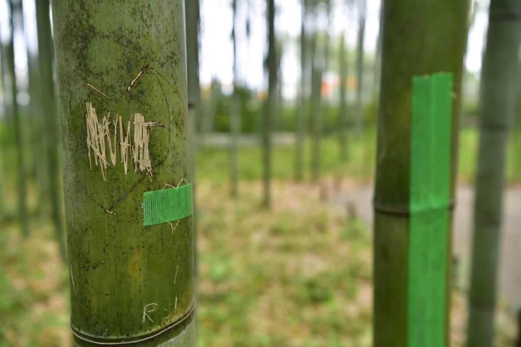 Arashiyama's Famed Bamboo Grove Vandalised by Tourists