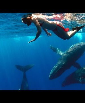 GoPro: Whale Fantasia