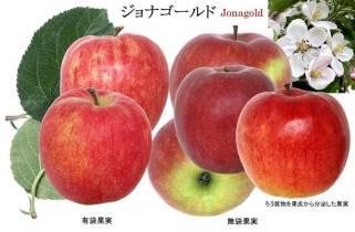 jonagold