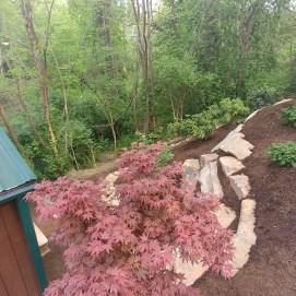 sokol-landscaping-japanese-maple-asheville-wnc