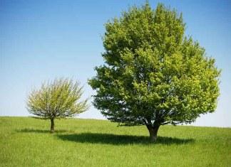 Третий день творения: суша и растения