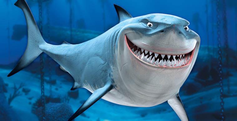 Что помогает акуле охотиться?