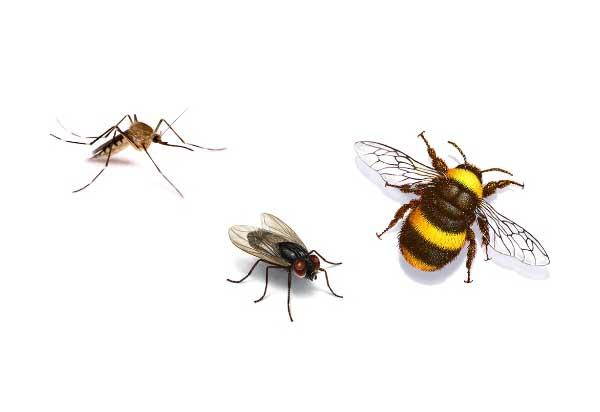 Муха и комар