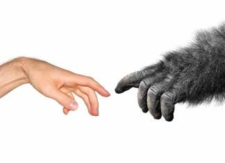 Если ты произошёл не от обезьяны