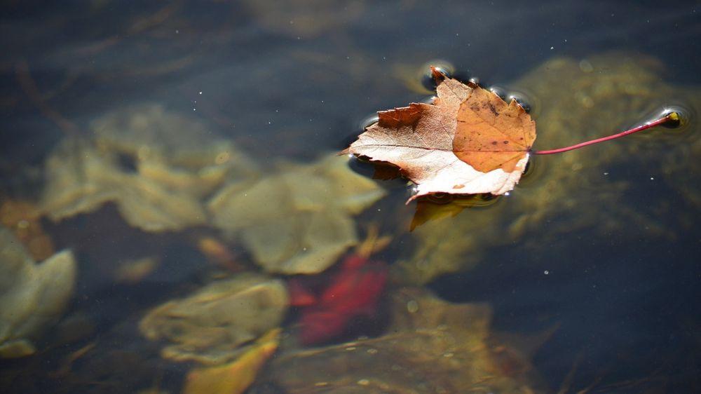 Не плыть по течению