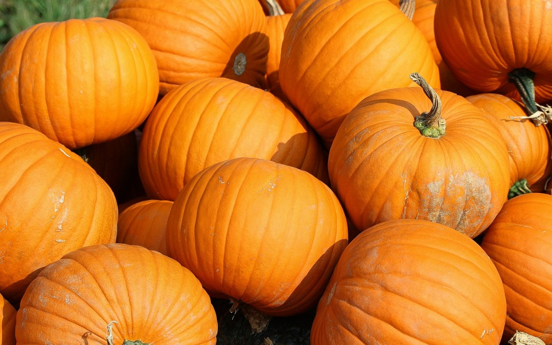Can You Grow Pumpkins?