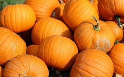Can You Grow Pumpkins?